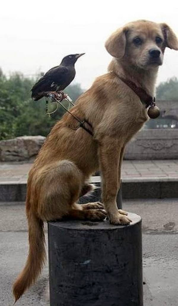 Funny animals of the week - 5 April 2014 (40 pics), dog and bird