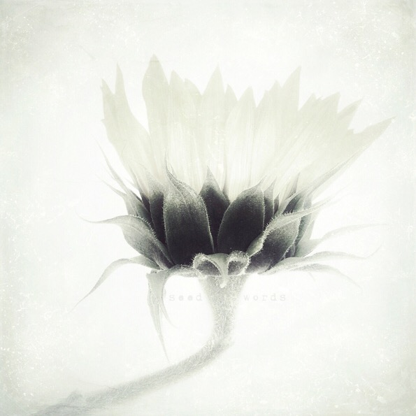 Seed Words © Carthrine Halsor