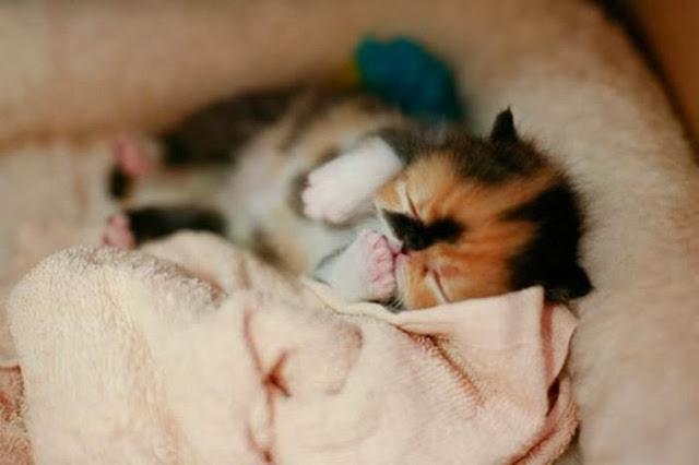 совсем маленький новорожденный котёнок спит