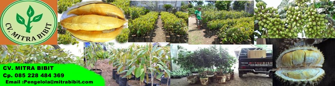 Jual Bibit Durian