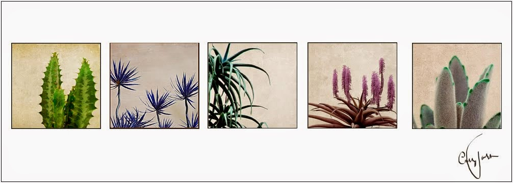 Flowers by Cathy Joubert