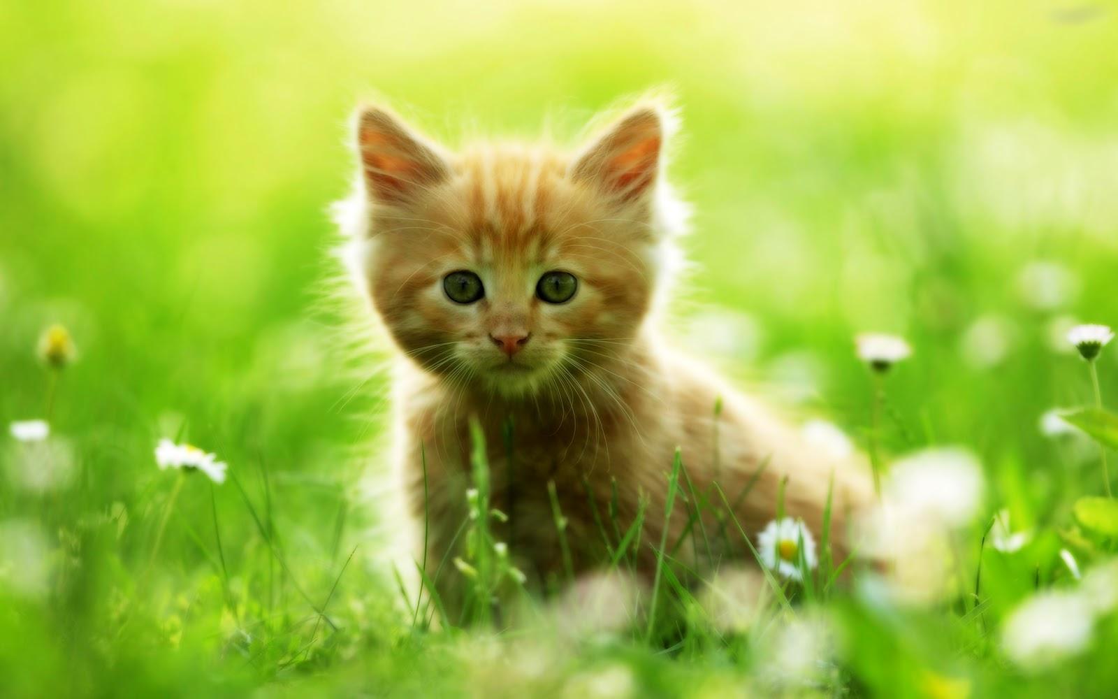 Cute Cats #3 | Cute Cats: 9meow.blogspot.com/2012/06/cute-cats-3.html