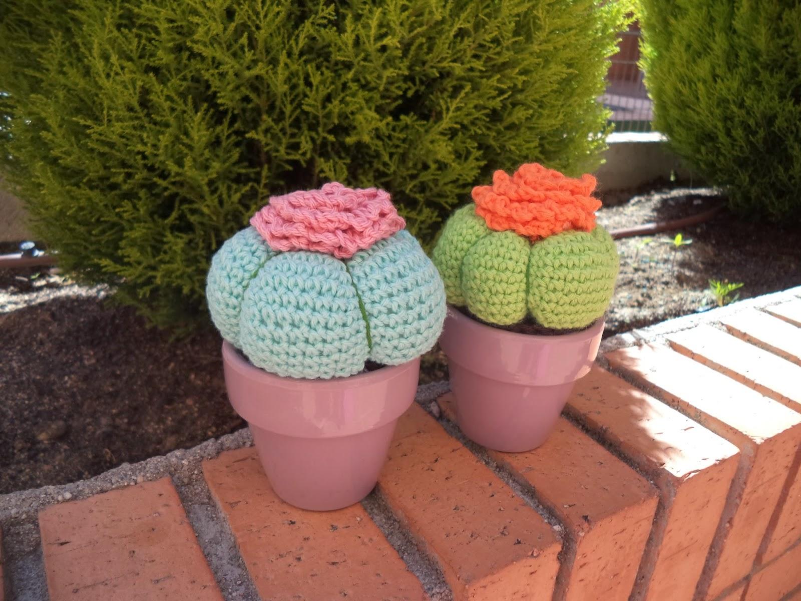 cactus amigurmi