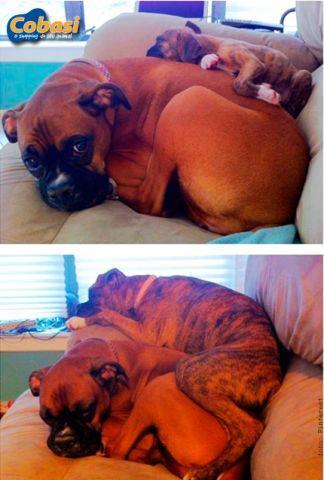 Cães antes e depois