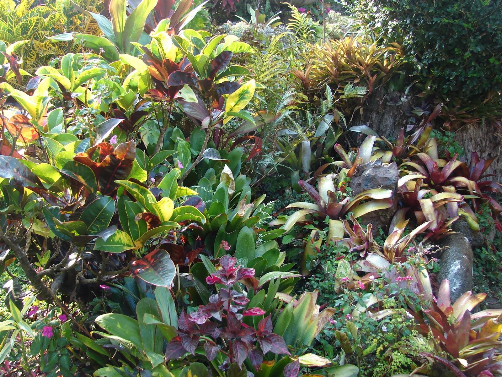 Paisajismo pueblos y jardines febrero 2011 - Plantas tropicales para jardin ...