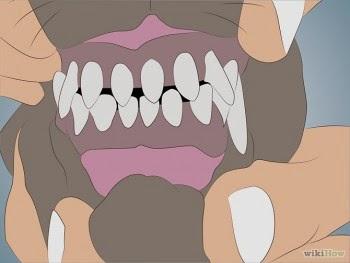 Hình 1: Cách xem răng đoán tuổi trên chó