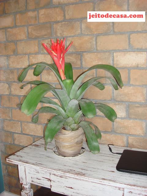 bromelia-flor-tropical