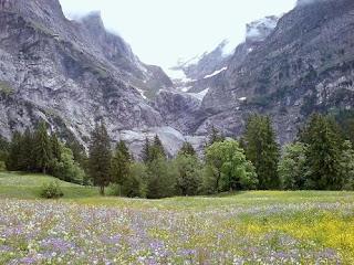 Bioma padang rumput