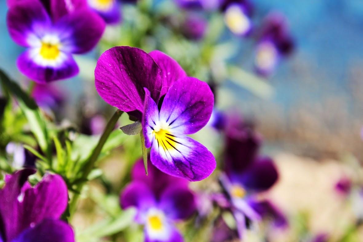 цветение на садовом участке