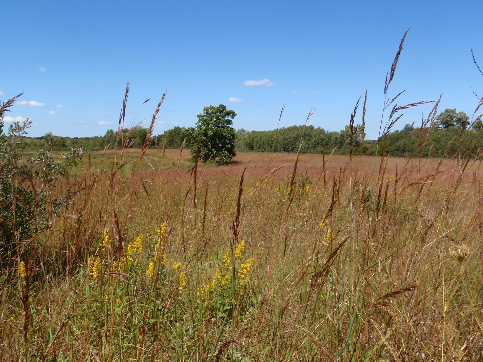 Prairie Grasses on the Ice Age Trail - Southern Kettle Moraine