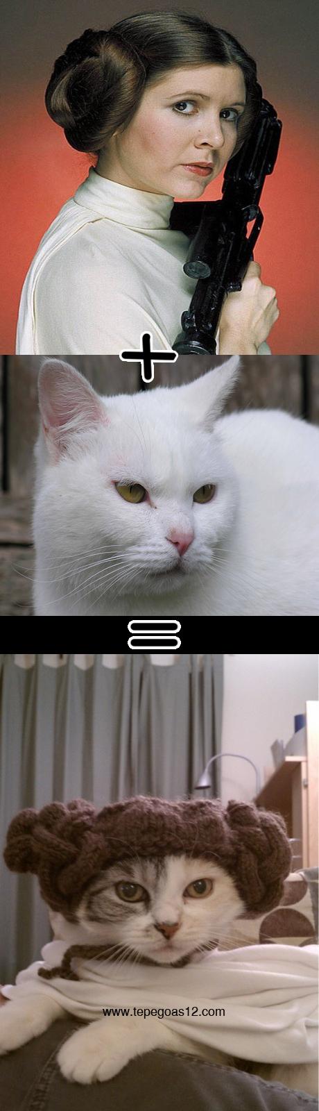Gato branco mutante, princesa leia,gato vestido de princesa leia
