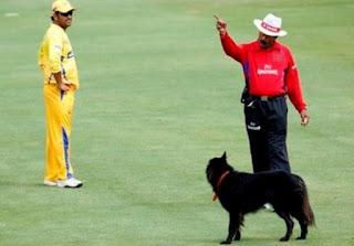 Funny Cricket