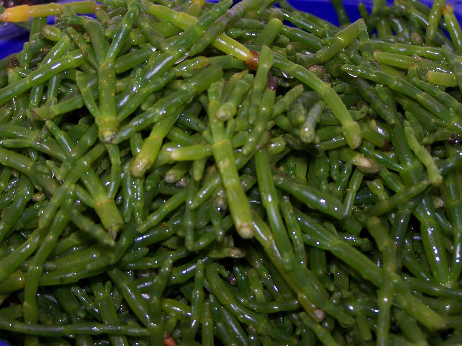 Les gourmandes astucieuses cuisine v g tarienne bio - Cuisiner les salicornes ...