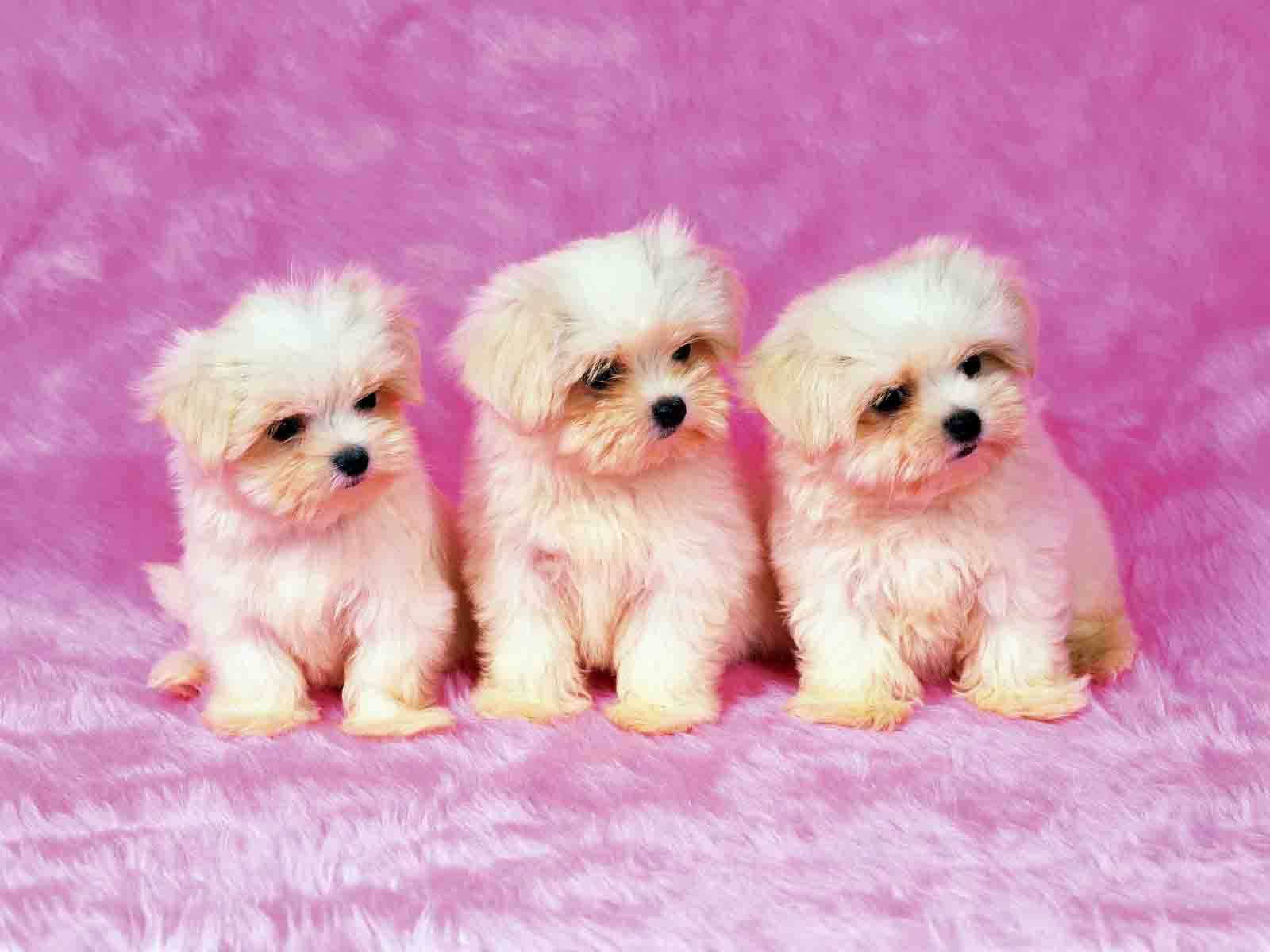 HD WALLPAPERS: CUTE PUPPY HD WALLPAPERS