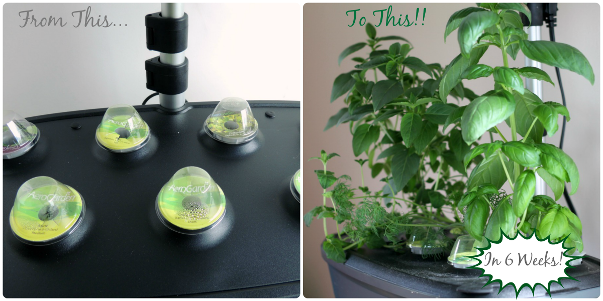 Why You Need An #AeroGarden (Product Review) + a 20% Off Discount Code #ad