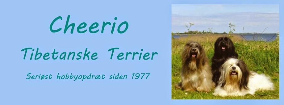 Cheerio Tibetanske Terriere