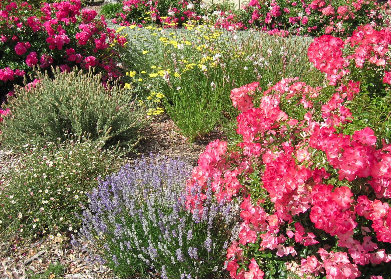 My Drought Tolerant World A Simple Gift