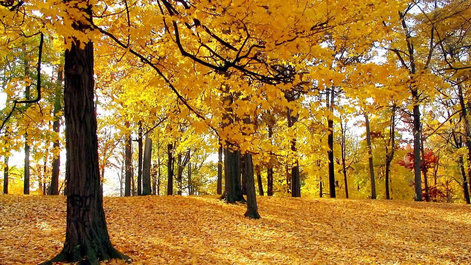 The best top autumn desktop wallpapers 27 En Güzel Sonbahar HD Duvar Kağıtları