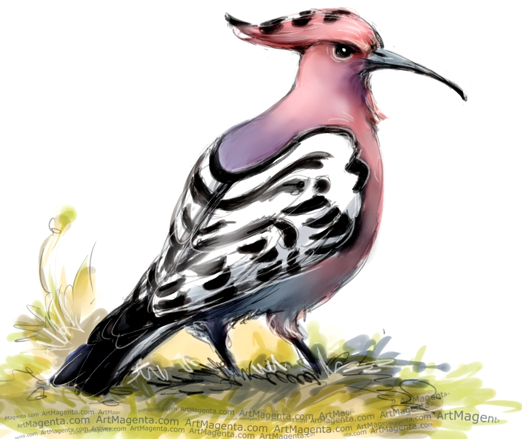 Hoopoe sketch painting. Bird art drawing by illustrator Artmagenta