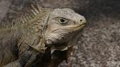 Parque de las Iguanas