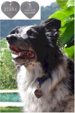 De uma medalha de identificação para seu cão