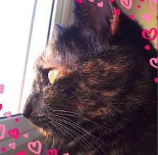 Mi gata es la mejor.