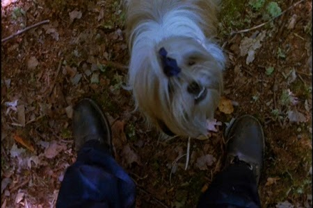 Image result for friday the 13th muffin the dog gif