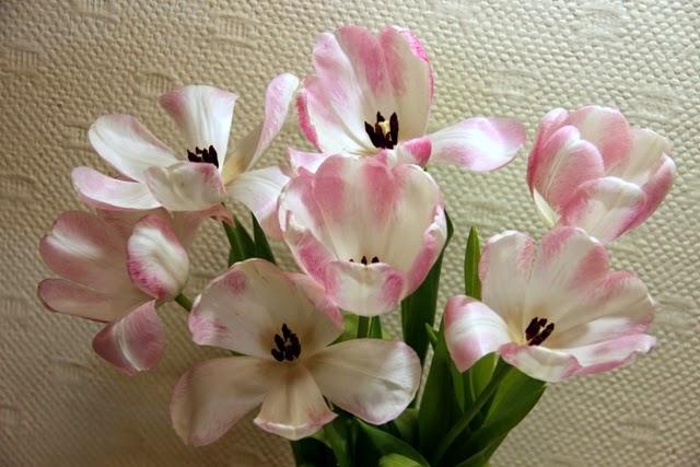 весенние цветы тюльпаны фото