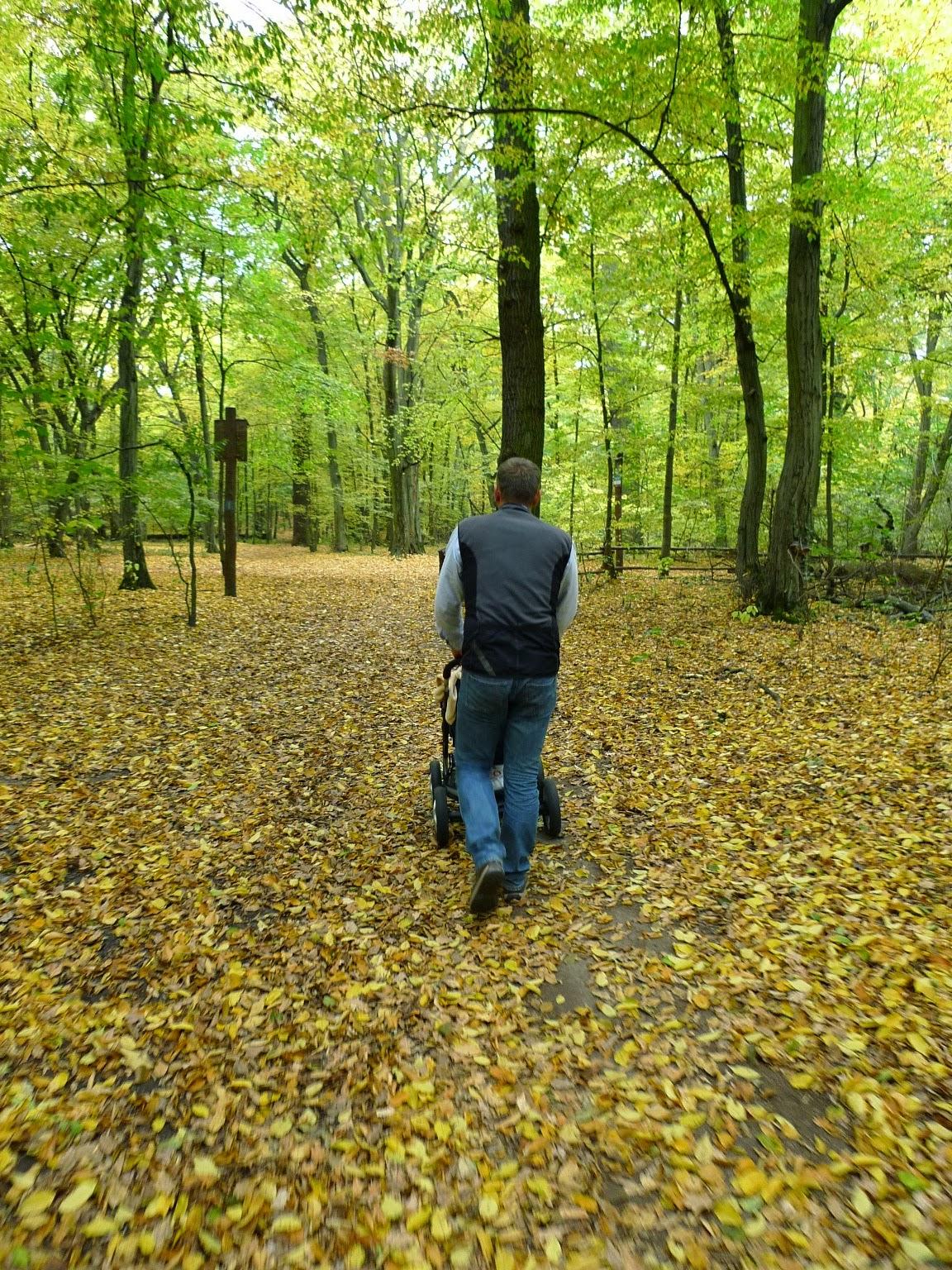 Odkrywanie okolic - Las Bielański/Discovering neighborhood - Bielanski Forest