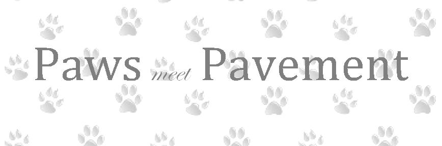 Paws meet Pavement