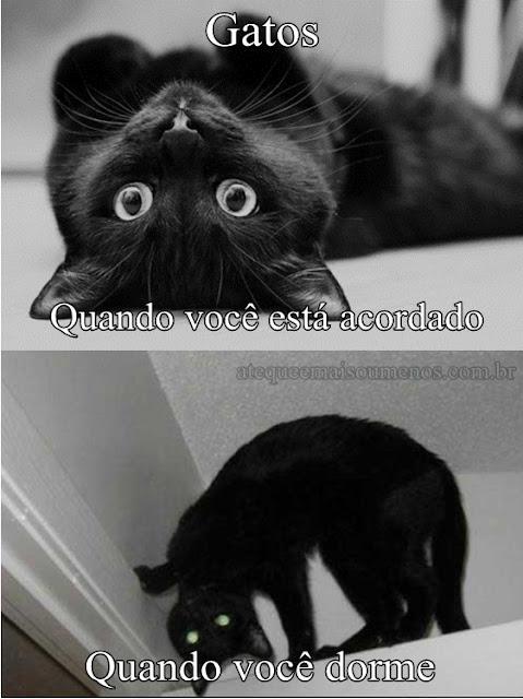 gato possuído pelo demonio