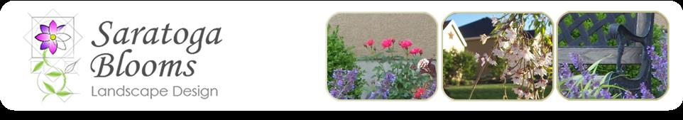 Saratoga Blooms Landscape Design