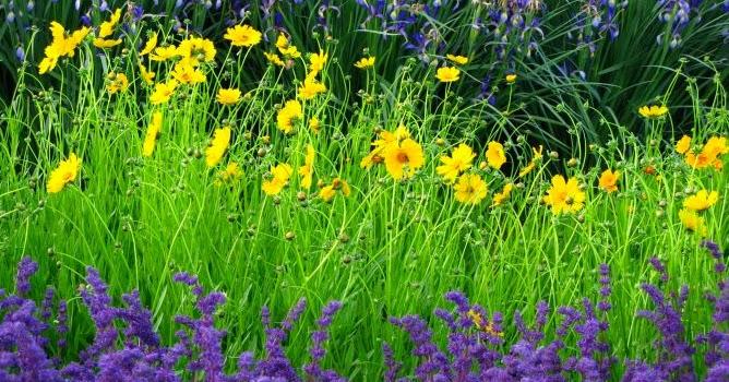 Arte y jardiner a plantas perennes peque as para for Plantas perennes exterior