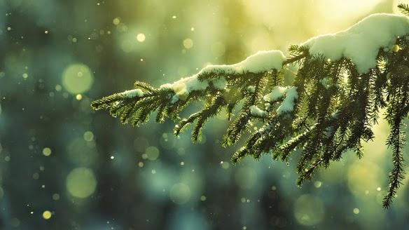 Yule - Pinheiro com neve