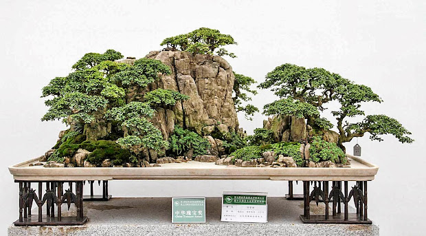 walter pall bonsai adventures