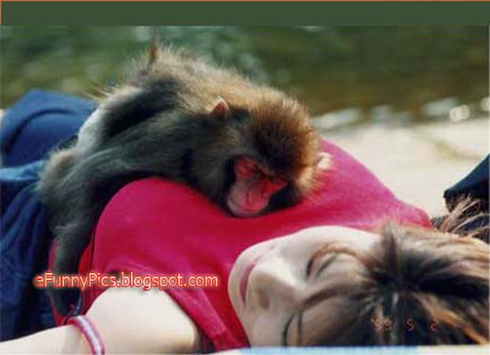Luckiest Monkey in the World
