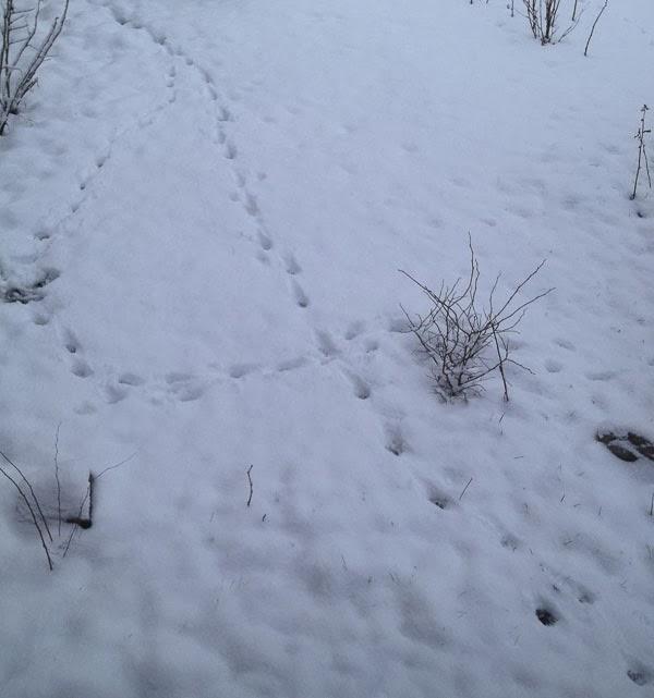 snö. snow, spår