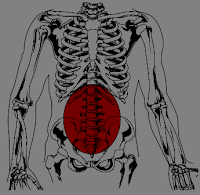 Lumbar region - Site of chronic low back pain