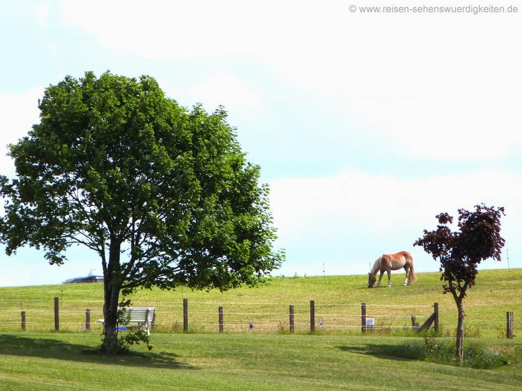 Pferd auf der Weide beim grasen