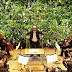 Música y plantas
