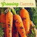 Tips for Growing Carrots this Fall #vegetable_gardening