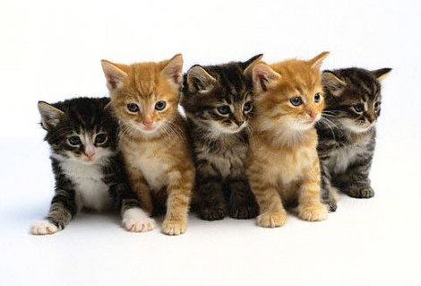 pics of kittens and puppies. kittens and puppies. cats and