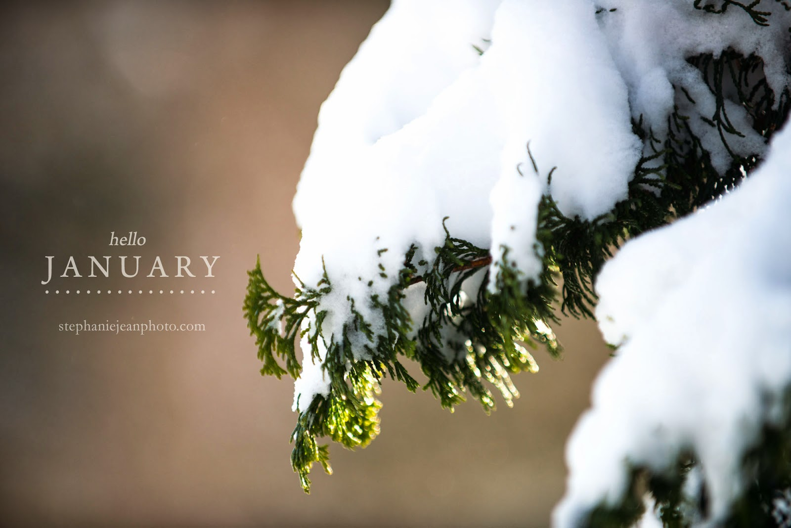 Evergreen branch covered in snow Long Island Photographer