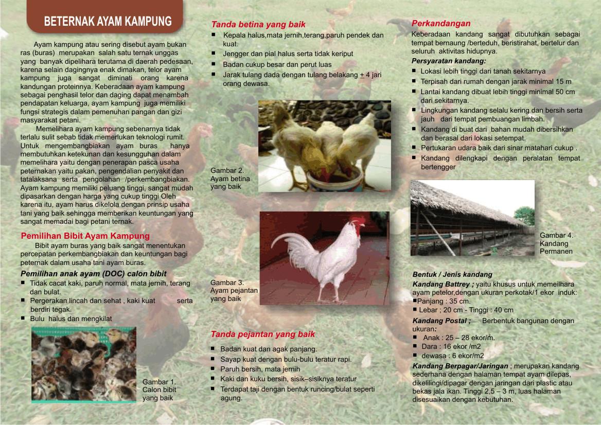 usaha ternak hewan
