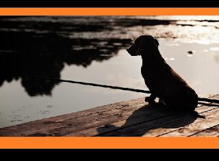 """conhecida pela enorme quantidade de cães que se suicidaram nela, parece ter sido resolvido. Trata-se da Overtoun Bridge, localizada em Milton, na Escócia, e chamada de """"a ponte dos cães suicidas"""", já que, aproximadamente, 100 cachorros se jogaram de sua altura nos últimos 50 anos. O veterinário David Sands, da Clínica do Comportamento Animal de Lancashire, na Inglaterra, resolveu investigar as causas enigmáticas do peculiar comportamento suicida adotado pelos cães nessa ponte, de 12 metros de altura. Primeiramente, ele descobriu que apenas cachorros da raça Labrador, Collie e Golden Retriever, saltavam da ponte. Por saber que algumas raças possuem um olfato ainda mais desenvolvido, Sands concluiu que, provavelmente, algum odor os estava deixando loucos."""