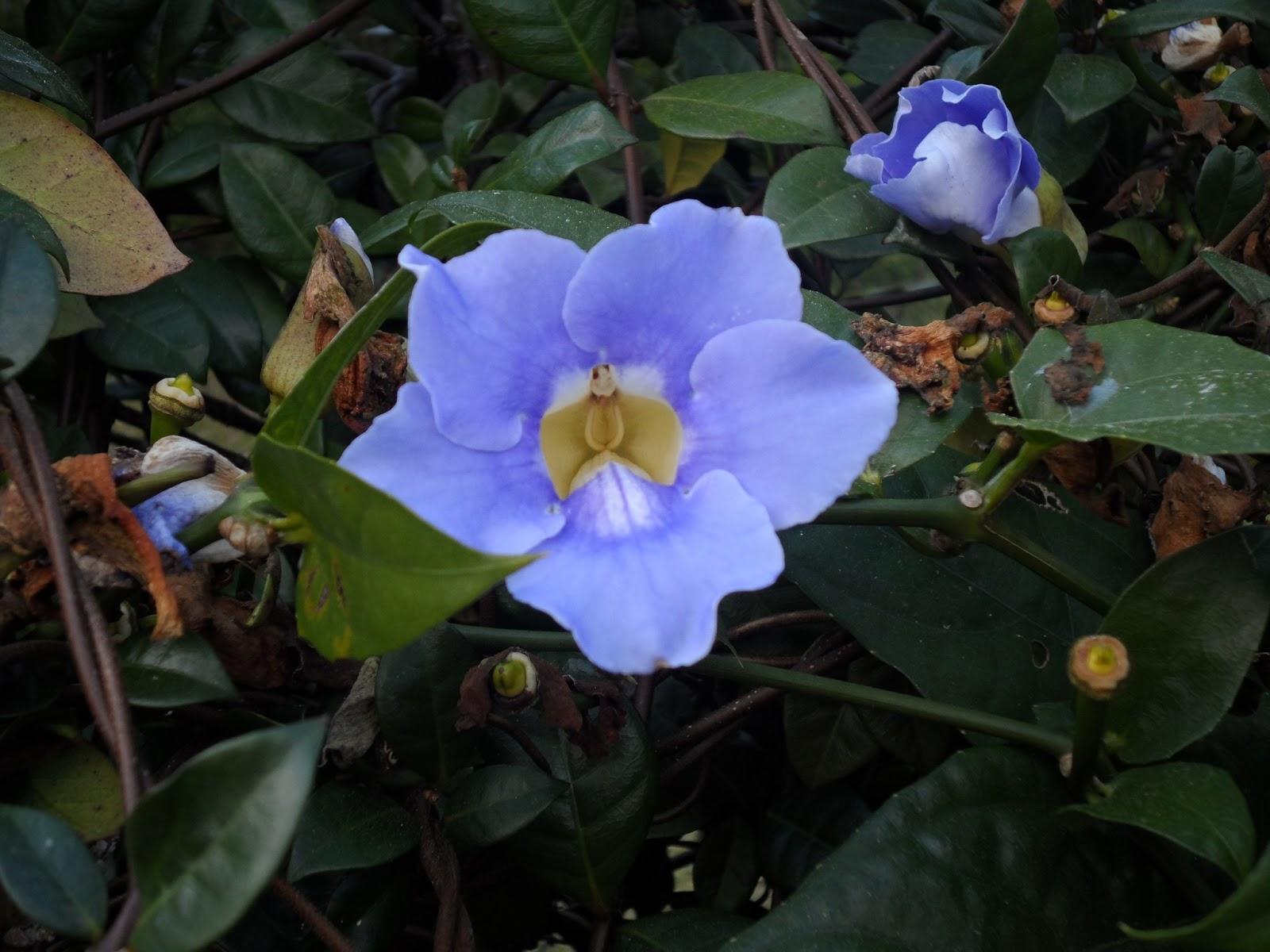 Bluepankakes