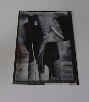 Peter Beard African Bull Elephant Carnets Africains Postcard B&W Photo