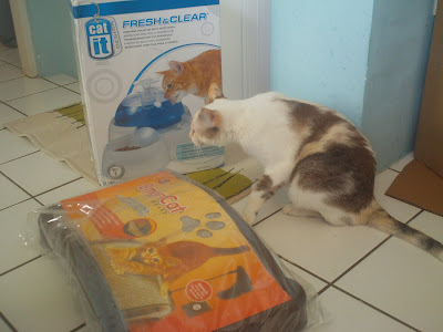 Gata Lili conferindo o bebedouro em forma de fonte e o arranhador novo