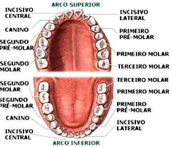 tipos de dentes para dentadura en