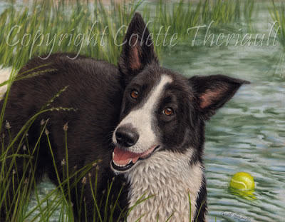 Border Collie Pet Portrait Painting by Colette Theriault